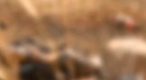 തൃശ്ശൂരിൽ സംസ്ഥാന പാതയ്ക്ക് സമീപം സ്ത്രീയുടെ മൃതദേഹം കത്തിക്കരിഞ്ഞനിലയിൽ