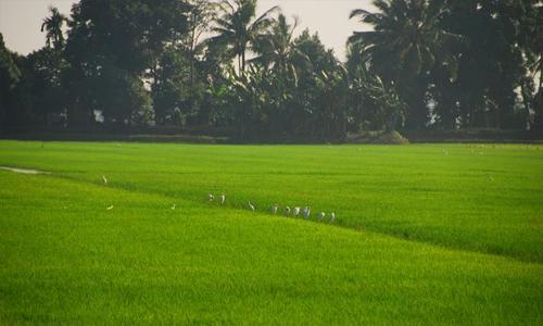 നെൽവയൽ - തണ്ണീർത്തട നിയമത്തിൽ ഭേദഗതി